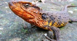 Specii noi Marele Mekong Asia WWF