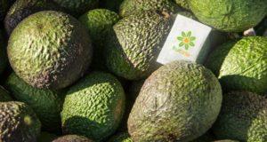 Pliculețe cu uleiuri esențiale care fac fructele și legumele să reziste mai mult