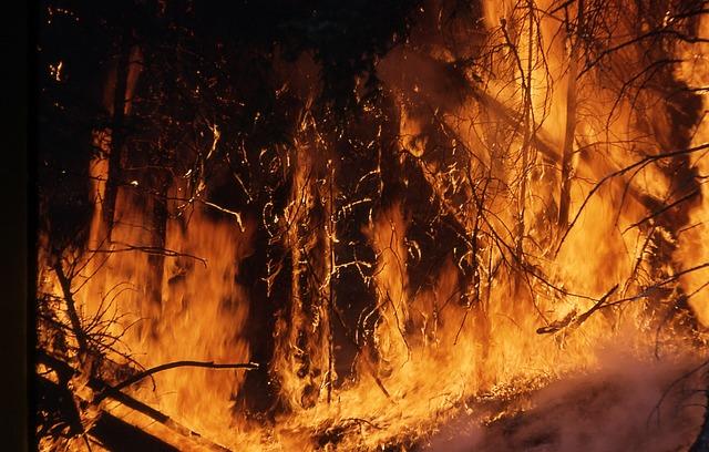 Numărul incendiilor din pădurile Romsilva a crescut cu 140%, în primele 9 luni