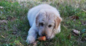 Și câinii pot fi vegetarieni. 5 adevăruri uimitoare