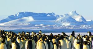 greenpeace antarctica rezervatie naturala