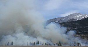 paduri incendii schimbari climatice