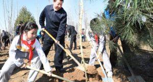 plantare copaci păduri