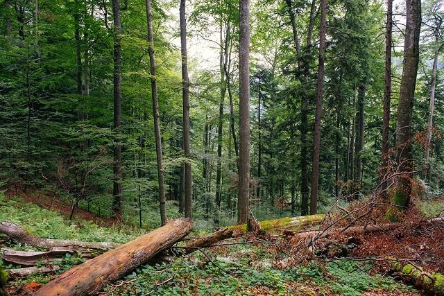 Alte 2.000 ha de păduri virgine