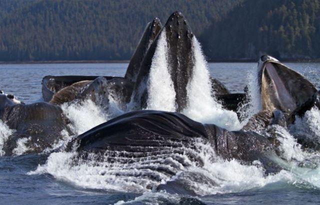 animale marine mari microplastice