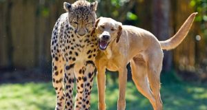 10 documentare care îți aratăviața animalelor așa cum nu ai mai văzut-o