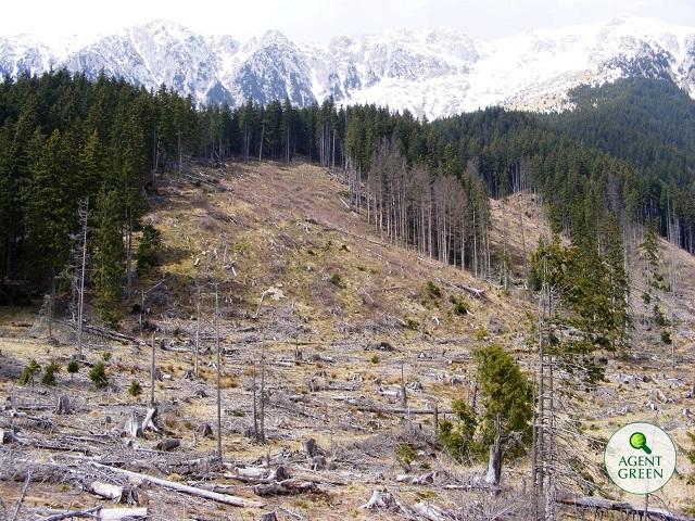 Romsilva propune creșterea suprafeței exploatabile din Parcul Național Semenic