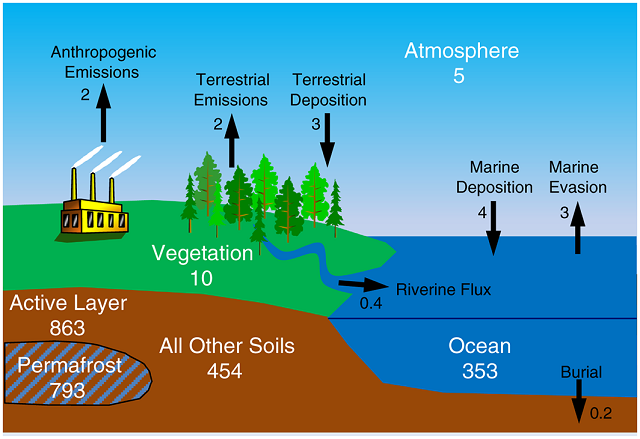 permafrost arctic mercur