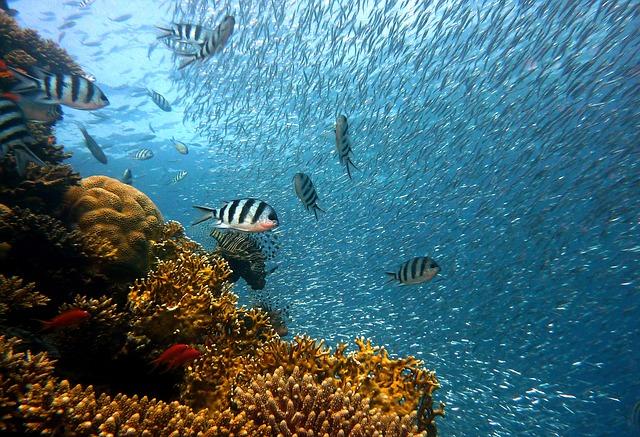 pescuit excesiv oceane