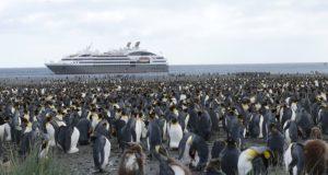 pinguini regali extinctie