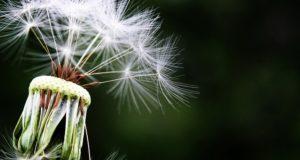 remedii naturale rinite alergice