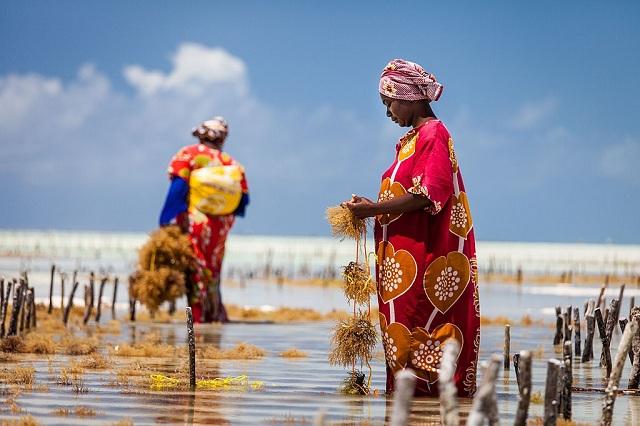 femei schimbari climatice