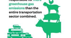 Cea mai importantă măsură pe care să o iei azi ca să ajuți mediul: alegerea unei diete vegetariene