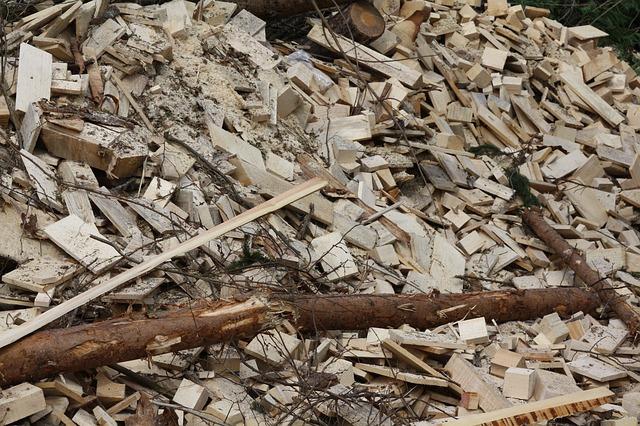 Biomasa, nișă de exploatare pentru industriile petrochimică și agro-alimentară din România