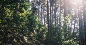 beneficiile naturii