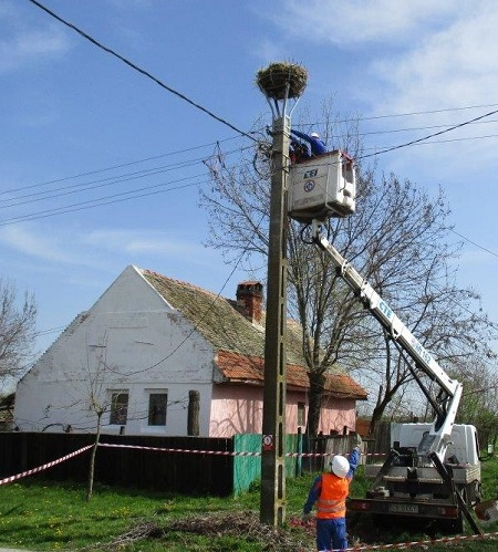 E-Distribuţie Banat instalează pe stâlpi suporturi pentru protejarea cuiburilor de barză