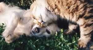 Cum reduci impactul pe care îl are animalul tău de companie asupra mediului