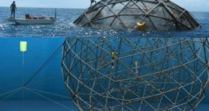 VIDEO Aquapods, structuri metalice în care 70.000 de pești pot crește la adâncimi mari în apă