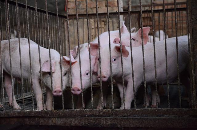 antibiotice animale obezitate