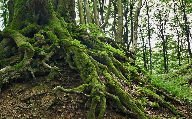 Pădurile virgine vor beneficia în continuare de protecție juridică