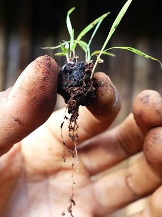 Seedballs, biluțe cu semințe care pot supraviețui pe terenuri aride