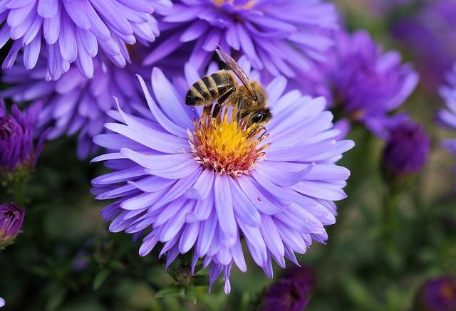 WWF România solicită protejarea insectelor polenizatoare