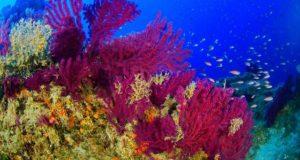 A fost descoperită o pădure virgină de corali în apropierea Siciliei