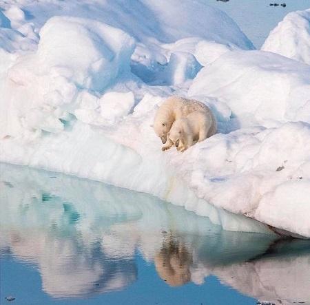 Val de critici negative după ce un membru al unui vas de croazieră a ucis un urs polar