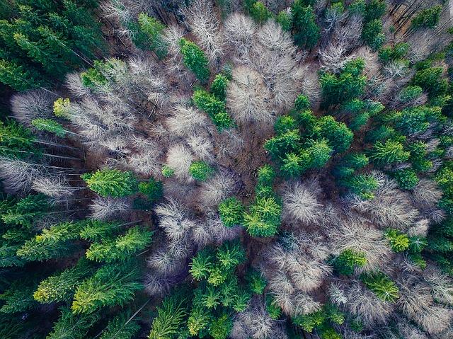 Ministerul Apelor și Pădurilor își va cumpăra o dronă pentru monitorizarea fondului forestier