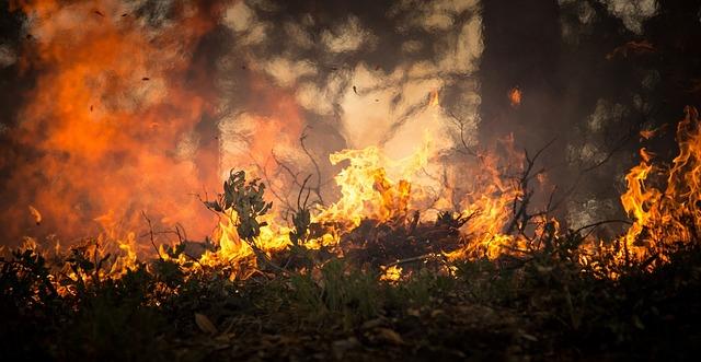 Efectele valurilor de căldură din Europa: incendii, decese și interdicții