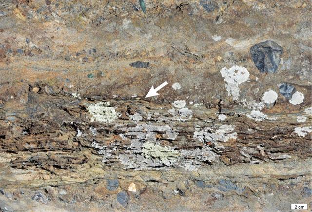 A fost găsită cea mai veche dovadă a vieții pe uscat, de acum 3,22 miliarde de ani