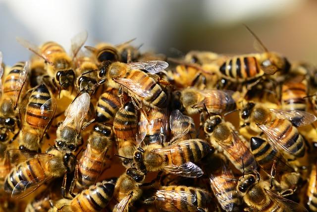 Administrația Trump anulează interdicția neonicotinoidelor care afectează albinele