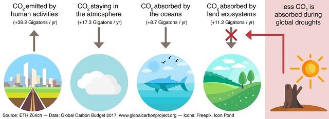 Studiu: seceta crește concentrația de dioxid de carbon din atmosfera Pământului