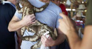 9 lucruri pe care ar trebui să le știi înainte să-ți faci o poză cu un animal sălbatic