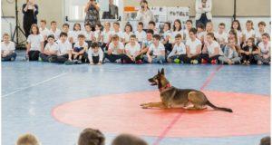 220 de școli din România sărbătoresc Ziua Internațională a Animalelor