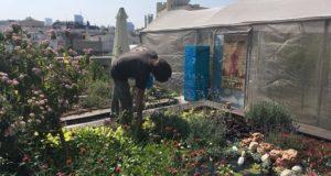 Cel mai vechi mall din Israel și-a transformat o parte din acoperiș în grădină urbană