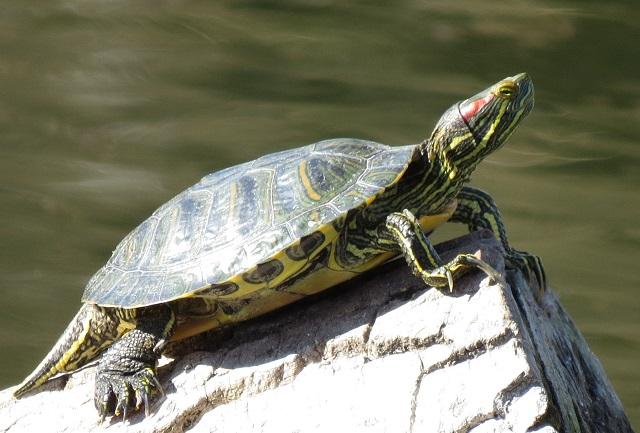 Sun Challenge Văcărești: 150 de participanți și 7.000 de euro donați pentru protejarea țestoaselor
