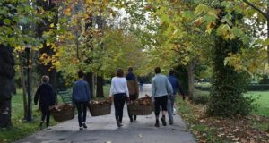 """Asociația Team Work caută voluntari pentru """"Curățenia de Toamnă în Grădina Botanică"""""""