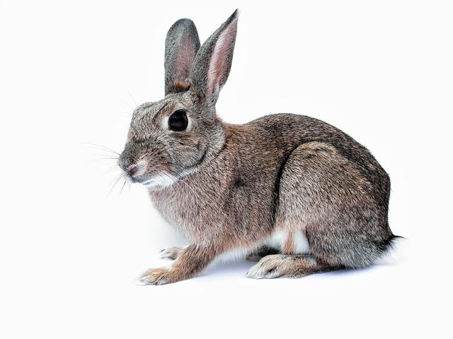 California va deveni primul stat din SUA care va interzice testarea cosmeticelor pe animale