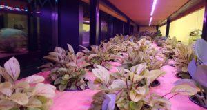 Microsera, grădina automatizată pe care o poți închiria