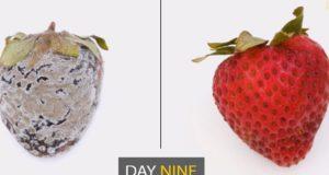 Apeel, soluția care le prelungește viața fructelor și legumelor de până la trei ori