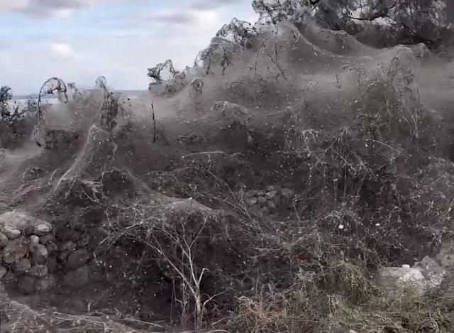 Un kilometru din malurile unui lac din Grecia, acoperit de o pânză de păianjen