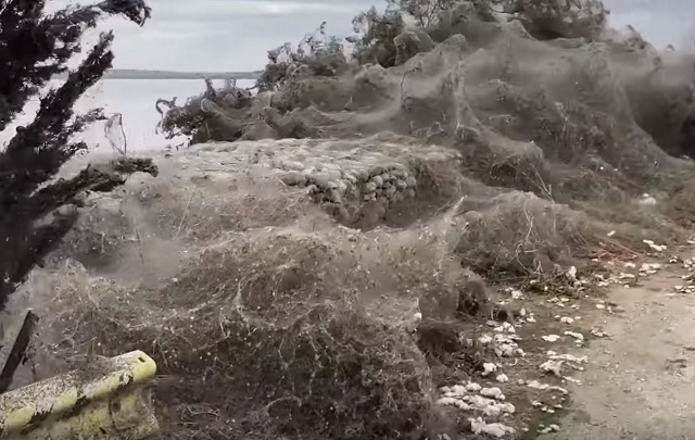Un kilometru din malurile unui lac din Grecia, acoperite de o pânză de păianjen