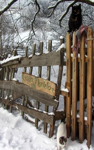 Căsuța Plantelor din Țarina aduce plantele din flora spontană în atenția românilor