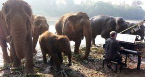 Un artist britanic le cântă muzică la pian elefanților dintr-un sanctuar din Thailanda