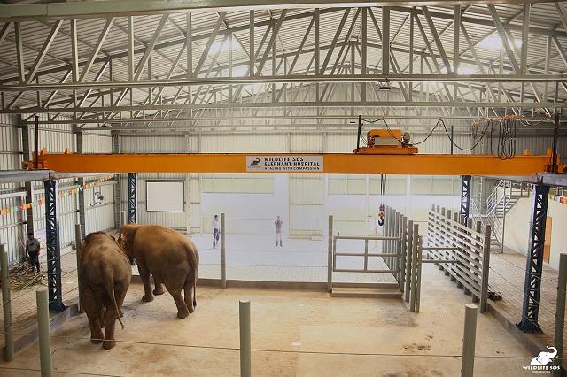 A fost inaugurat primul spital pentru elefanți din India