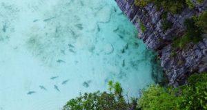 Rechinii s-au întors în golful Maya din Thailanda după ce accesul turiștilor a fost interzis