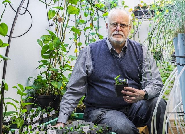 """Cercetătorii au inventat o """"super plantă"""" care absoarbe poluanții din case"""