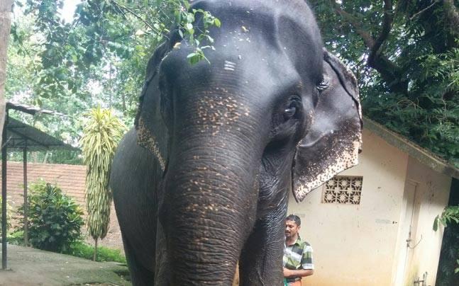 elefantul Dakshayani